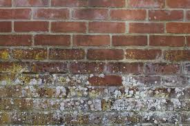 How To Stop Mold In Basement by How To Prevent Mold And Mildew In Your Home Rain Control Of