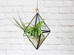 hanging geometric terrarium air plant design studio