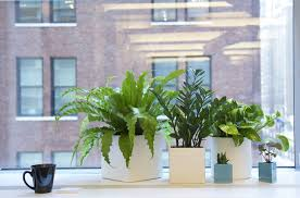 plants for office ask the expert 10 tips for office plants from the sill gardenista