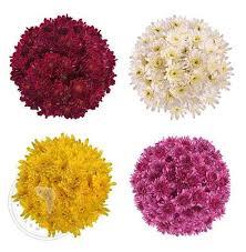 Bulk Flowers Buy Fresh Wholesale Bulk Flowers U2013 Bloomingmore