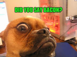 Dog Bacon Meme - did you say bacon dog imgflip