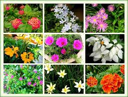 garden flowers names u2013 home design and decorating
