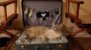 My Cat Peed On My Bed My Mom Made My Cat A Suitcase Bed And He Absolutely Loves It