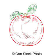 stock illustration of apple sketch sketch of an apple hand drawn