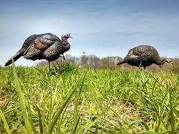turkey talk