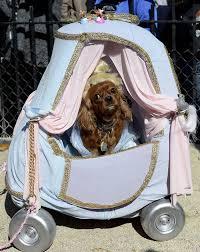 star wars u0027 to starbucks dogs flaunt creative costumes at