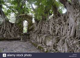 interesting trees roots fasiladas bath gonder architecture