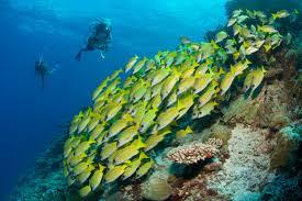 six senses laamu reef and rainforest