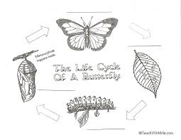 butterfly life cycle anchor chartsposters