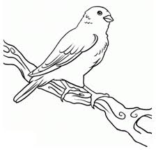 canary coloring page coloring home
