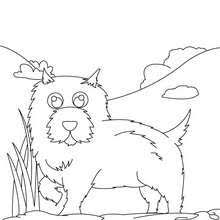 dachshund coloring pages hellokids com