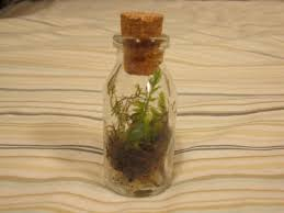 tiny bottle terrarium by balloonfighter on deviantart