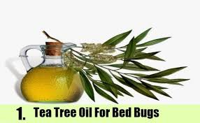 What Kills Bed Bugs For Good 9 Home Remedies To Kill Bed Bugs Natural Treatments U0026 Cure For