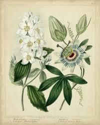 floral u0026 botanical posters at allposters com