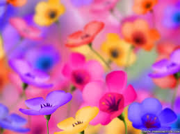 wallpaper of colorful flowers colorful flowers wallpapers desktop phone tablet