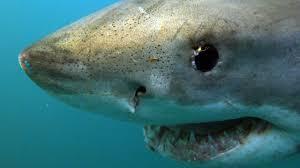 the best discovery sharks u2013 discovery sharks discovery kids