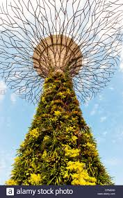 solar trees in the gardens by the bay in singapore the solar