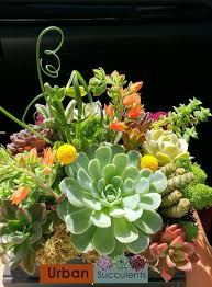 succulent centerpieces succulent centerpieces gallery succulently