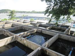 catfish farming in tanks