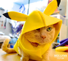 pikachu costume how to make a pikachu costume for your pet no sewing required d