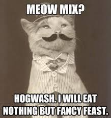 Cat Problems Meme - first world cat problems original business cat meme quickmeme