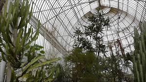 Botanic Garden Belfast by Palm House At Botanic Gardens Belfast Youtube
