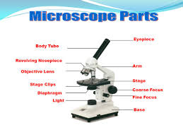compound light microscope facts does the lens of a light microscope work