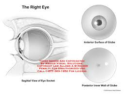 Surface Anatomy Eye Medical Exhibits Demonstrative Aids Illustrations And Models