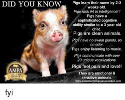 Clean Animal Memes - did you know a certified breeder pigs learn their name by 2 3