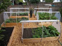 enchanting raised backyard vegetable garden mixed with wooden