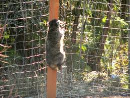 how to keep raccoons out of garden fence home outdoor decoration