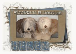 bearded collie mdr1 the uk bearded collie website view topic bravecto u0026 lepto 4
