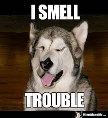 Please Memes - demented dog says i smell trouble i m mimi please meme me