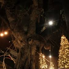 Santee Christmas Lights Old Santee Canal Park Stony Landing Rd 16 Photos Parks 900