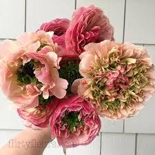 Ranunculus Flower Flower Focus Ranunculus Flirty Fleurs The Florist Blog