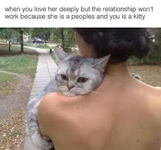 Cat Hug Meme - it can never be the meta picture