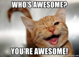 Kitty Meme Generator - photos youre awesome cat meme gallery photos designates