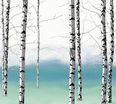 Wall Mural White Birch Trees Birch Tree Silhouette Wallpaper Wallpapersafari