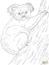 koala climbing tree australian coloring page countries u0026 culture