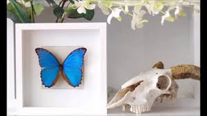 butterfly home decor ideas youtube