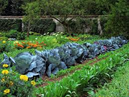 how to start a vegetable garden with easy steps front yard