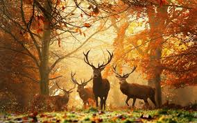 fall forest animals national geographic fall fall thanksgiving