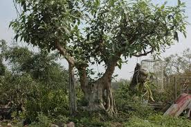 [Super Xịn] Bạn thuộc loại cây gì và bạn là người thế nào? Images?q=tbn:ANd9GcT9yrL4SBgaLb6gr_5Hmx3khZRBR1uGfp9Kqw4lqAXqoICPFyq3fw