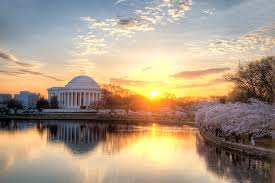 Cherry Blossom Facts by 3 Top Tips For The Dc Cherry Blossom Festival Loews Hotels Blog