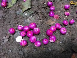 a tale of two tortoises greenes falls rainforest track u2013 mt