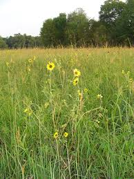 native plants of massachusetts u s fish and wildlife service open spaces blog