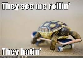 They See Me Rollin They Hatin Meme - they see me rollin they hatin animal capshunz funny animals