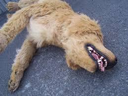 animal prop rentals dapper cadaver props