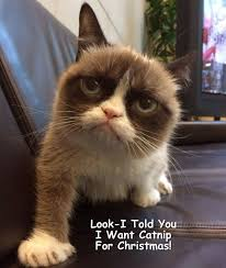 Tard The Grumpy Cat Meme - 120 best grumpy cat meme by gary images on pinterest grumpy cat