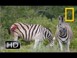 Animal Planet Documentary Grizzly Bears Full Documentaries - documentary heavenzoo com part 3